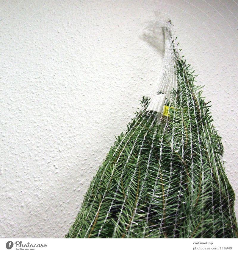 nett verpackt Weihnachten & Advent Baum Winter Feste & Feiern Landwirtschaft Weihnachtsbaum Tanne Wohnzimmer Tradition nachhaltig Musikfestival Verpackung