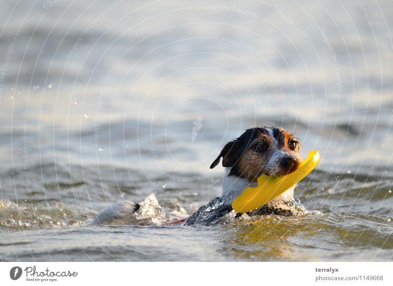 Hund im Ozean blau weiß Wasser Freude Tier schwarz gelb Bewegung lustig Glück Schwimmen & Baden braun frei Fröhlichkeit Geschwindigkeit