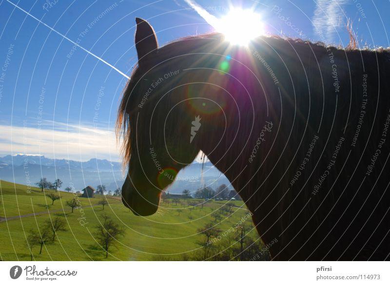 Erleuchtung Baum Sonne grün blau Wolken dunkel Wiese Pferd Strahlung Seite Weide Säugetier rechts