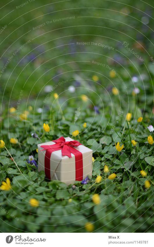 in der Wiese Feste & Feiern Valentinstag Muttertag Geburtstag Frühling Blume Gras Verpackung Paket Schleife Gefühle Stimmung Liebe Verliebtheit Romantik