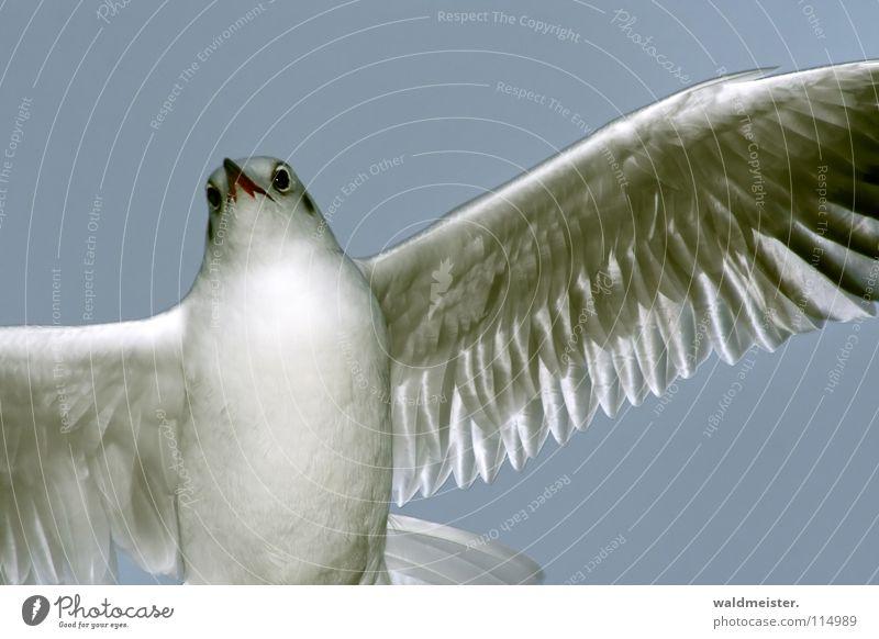 Tagmöwe - Ende der Serie Möwe Lachmöwe Vogel Meer Strand Möve Himmel Luftverkehr fliegen Flügel Feder
