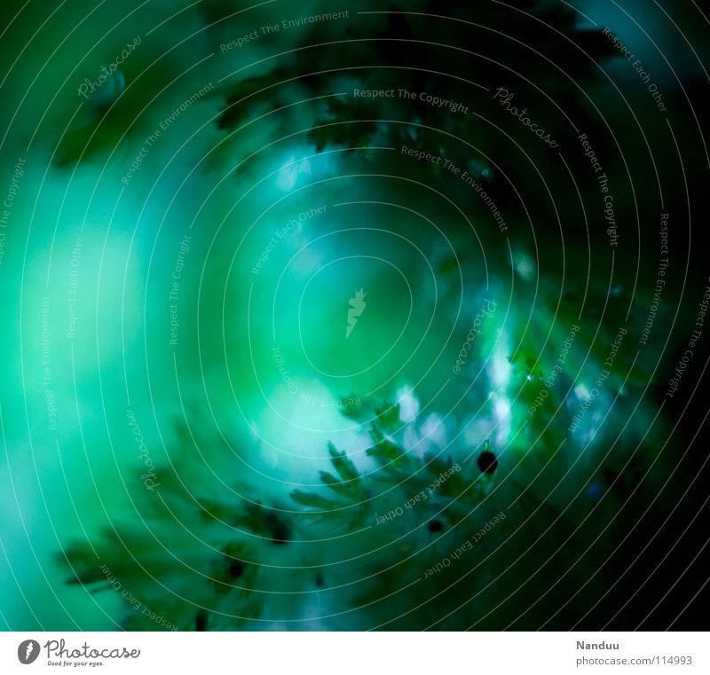 Oh Tannenbaum grün Makroaufnahme Hintergrundbild Unschärfe Tiefenschärfe Nadelbaum Fichte Eiskristall Experiment Winter Petersilie Nahaufnahme