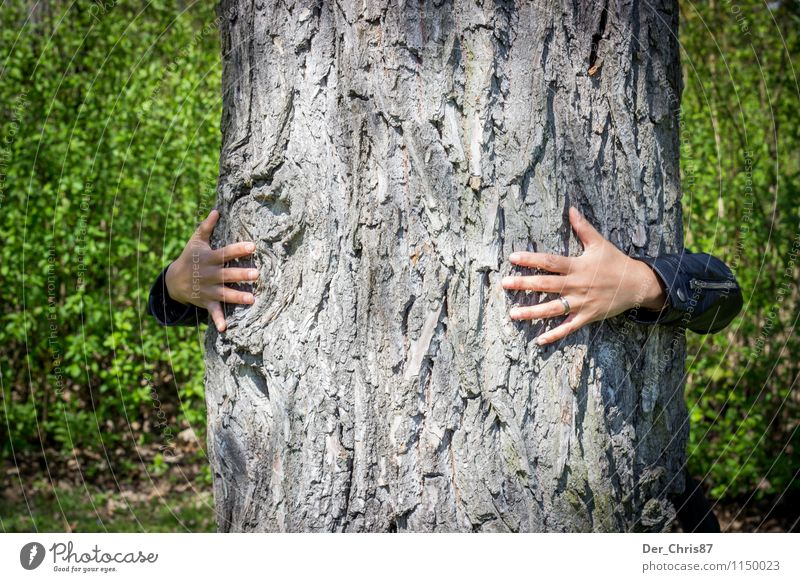 Mein Baum Umwelt Natur Wald berühren Liebe Umarmen nachhaltig natürlich Lebensfreude Kraft Leidenschaft Vertrauen Geborgenheit loyal trösten Ausdauer Farbfoto
