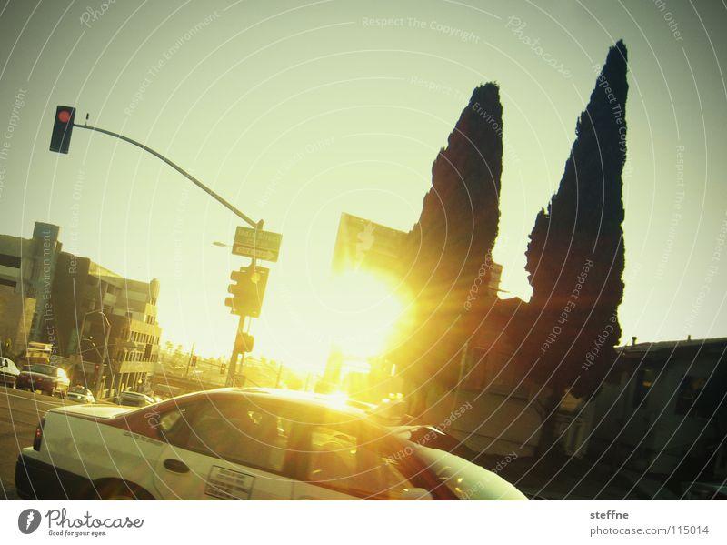 TAXI DRIVER Kalifornien Los Angeles San Francisco Taxi Ampel Baum Zypresse Gegenlicht heiß lässig Krimineller Sommer fahren Taxifahrer abbiegen Filmindustrie