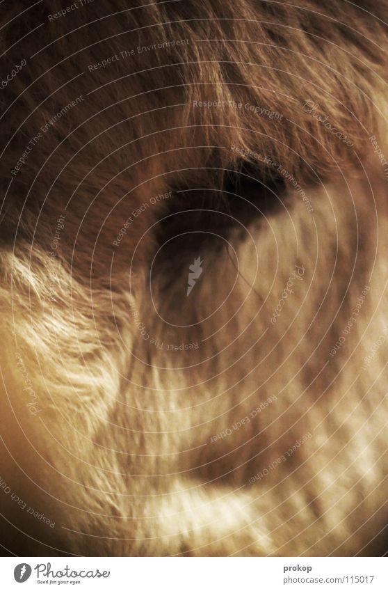 Viechus Anonymus Tier Fell nah Trauer abstrakt Tiefenschärfe gefangen Säugetier Verzweiflung Makroaufnahme Nahaufnahme geschlossen Traurigkeit prokop