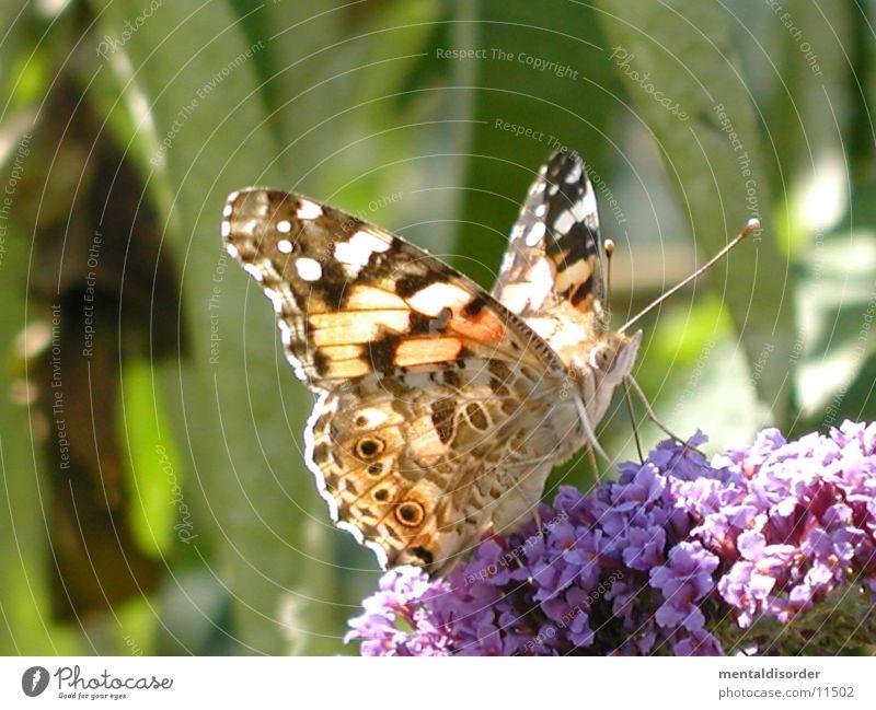 Auge um Auge... *2 Blume rot schwarz Flügel Schmetterling