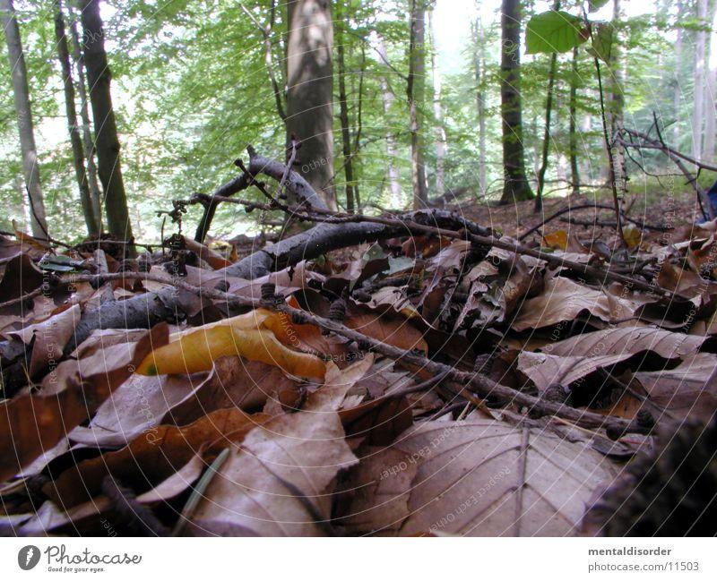 auf dem Waldboden rumkriechen Baum Blatt Holz nass Ast