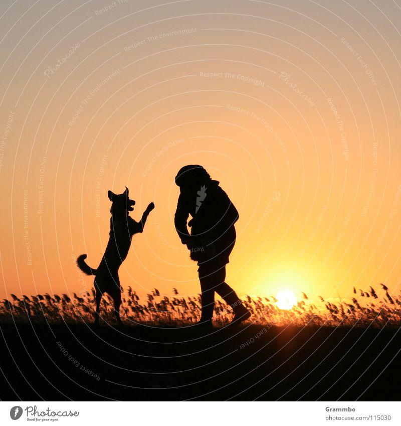 HANDSTAND habe ich gesagt! Hund Frau Abendsonne Gegenlicht Sonnenuntergang gelb rot schwarz Silhouette Gras Usedom Schilfrohr Spielen Abenddämmerung