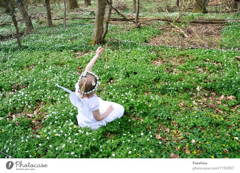 Wachse Bäumchen wachse!!! Umwelt Natur Landschaft Pflanze Frühling Schönes Wetter Baum Blume Wald frei hell Wärme Fee Elfe Buschwindröschen Fröhlichkeit