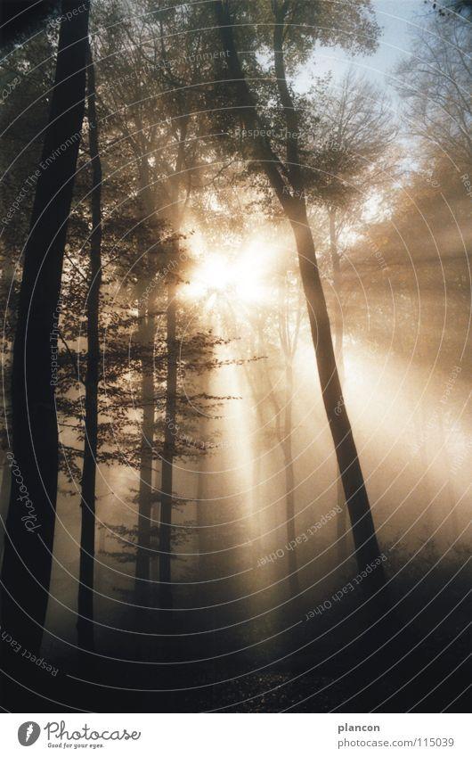 Besinnung Sonne Wald Herbst Stimmung Nebel November