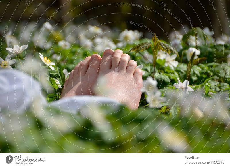 barfuß Mensch Kind Kindheit Haut Fuß Umwelt Natur Pflanze Frühling Schönes Wetter Blume Blüte Park Wald frei hell nah natürlich Wärme grün weiß Buschwindröschen