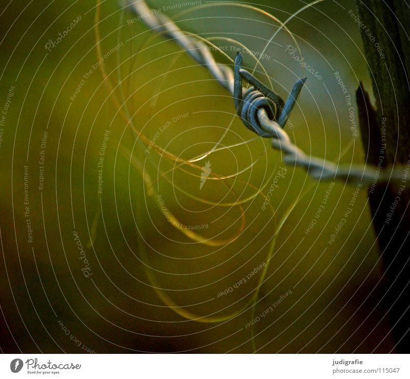 Rosshaar Farbe Holz Haare & Frisuren glänzend Pferd gefährlich bedrohlich Spitze Weide Zaun hängen Barriere Säugetier Verbote fein Stacheldraht
