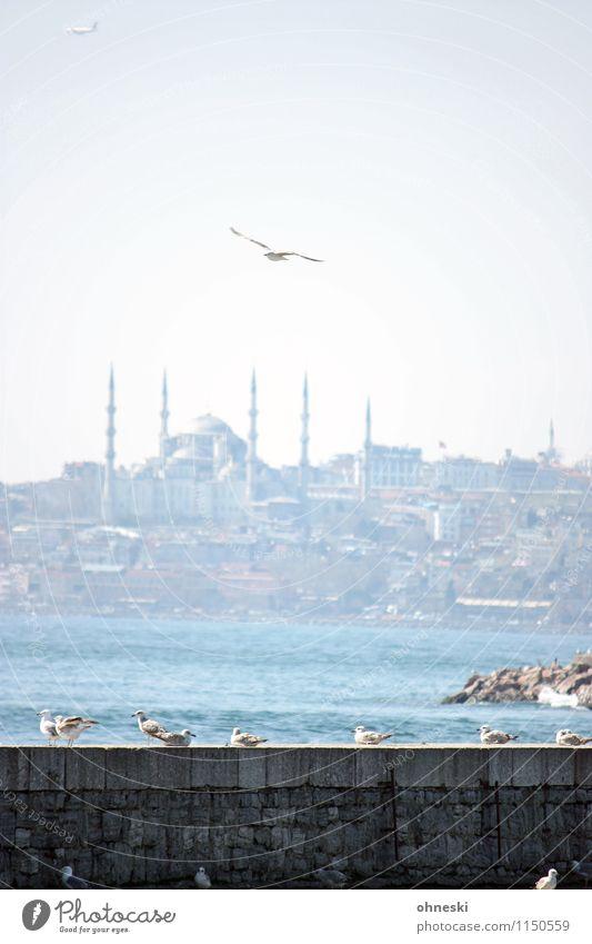 langlebig   Istanbul Ferien & Urlaub & Reisen Meer Küste fliegen Vogel Tiergruppe Möwe Sehenswürdigkeit Türkei Blaue Moschee Bosporus Marmarameer