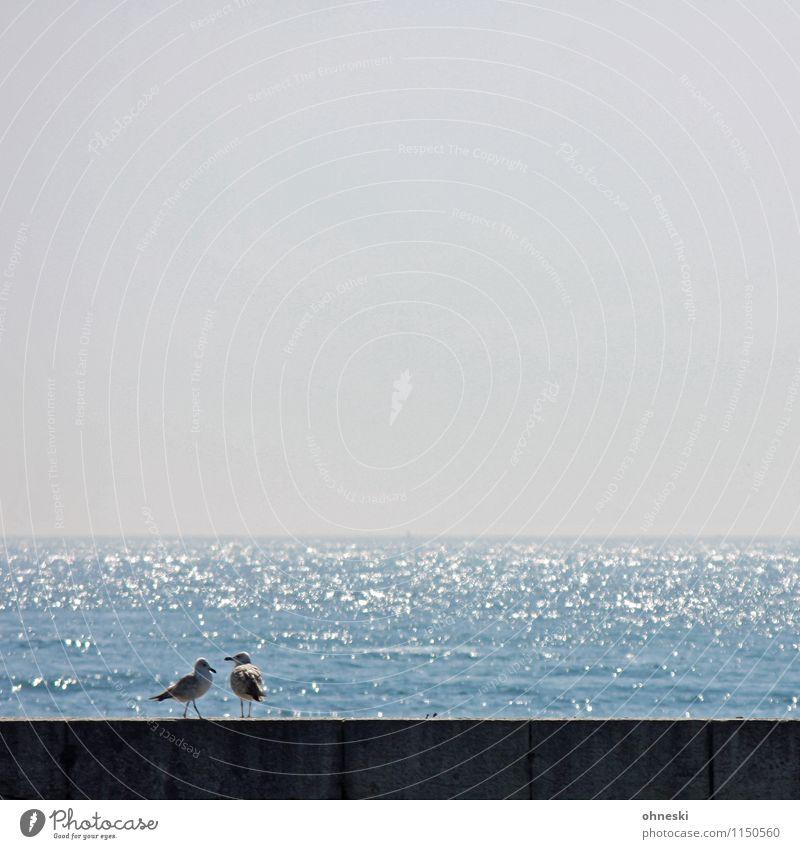 Zweisam Meer Tier Wand Küste Mauer Vogel Zusammensein Freundschaft Lebensfreude Zusammenhalt Möwe Sympathie Frühlingsgefühle Tierliebe