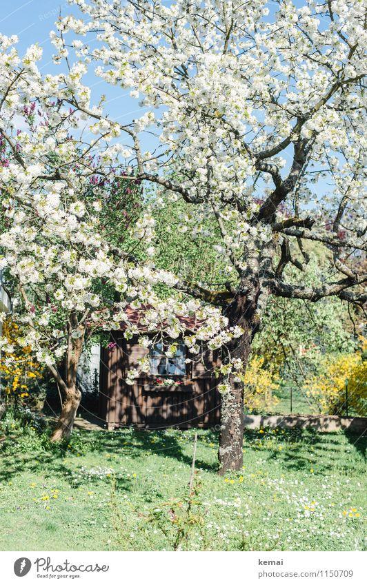 Blühe! Natur Pflanze blau grün Baum Wärme Blüte Frühling Wiese Garten Wachstum frisch groß Blühend Schönes Wetter Hütte