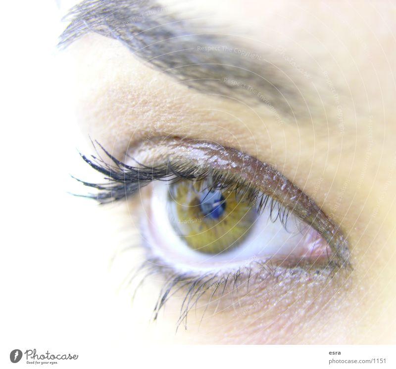 mein Auge Mensch Blick Wimpern Augenbraue Pupille