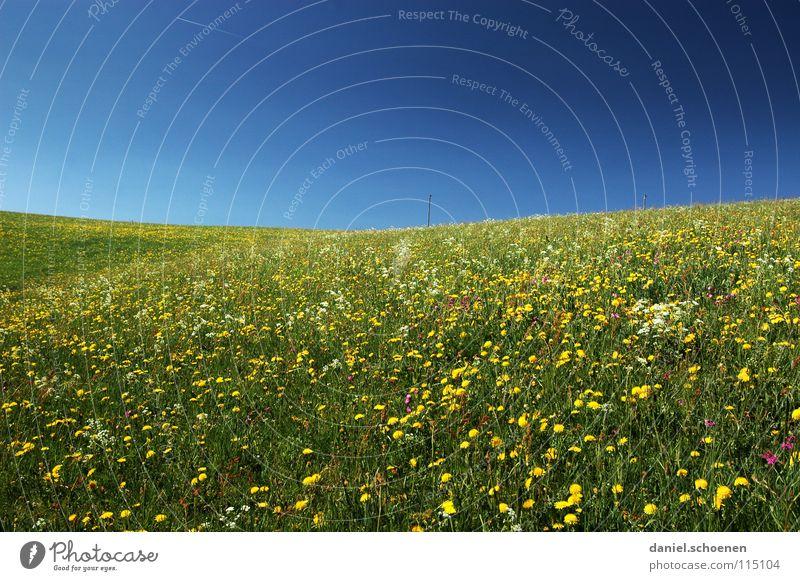 für alle Schneemuffel ! Sommer Frühling Hintergrundbild schön zyan Wiese Freizeit & Hobby Blume Blüte grün gelb Löwenzahn Erholung Horizont Hügel Wärme