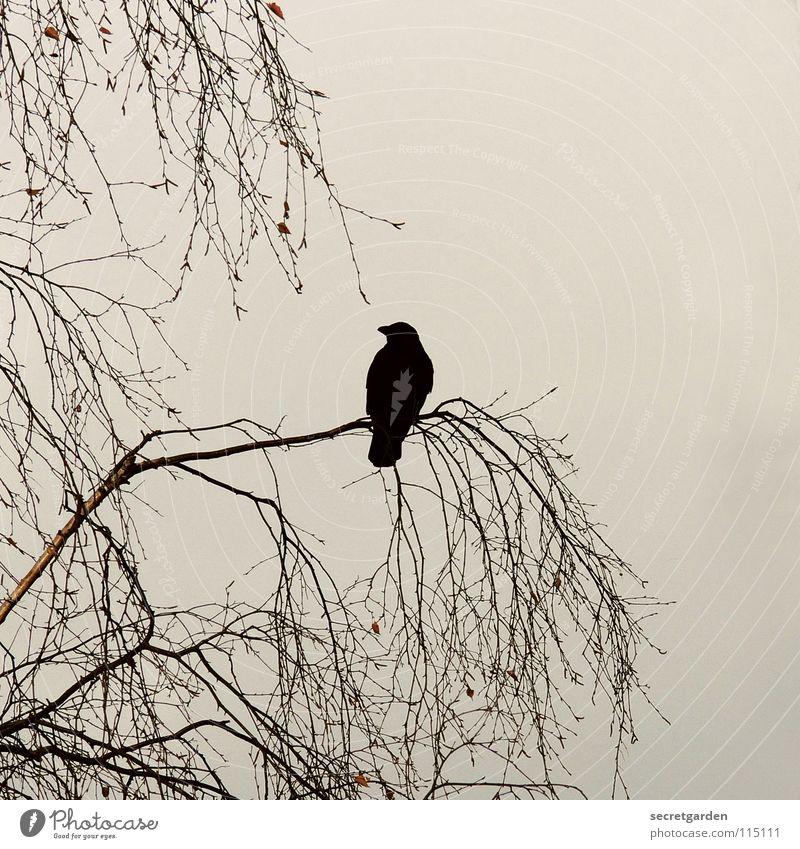 krabat Krähe Rabenvögel Vogel Baum Blatt laublos Winter Herbst hocken hockend Raum schlechtes Wetter Wolken ruhig Erholung Trauer Langeweile Pause gefährlich