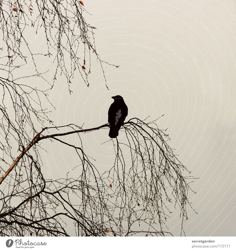 krabat Natur Himmel Baum Winter ruhig Blatt Wolken dunkel Erholung Herbst Tod Traurigkeit braun Raum Vogel warten