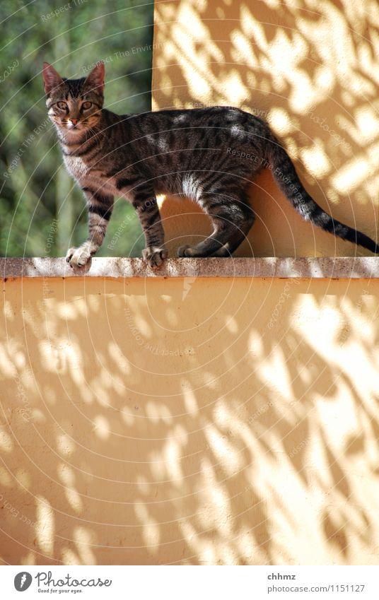 Schattenspiel Katze Tier gelb Wand Mauer elegant stehen niedlich Neugier dünn Haustier Putz Öffnung