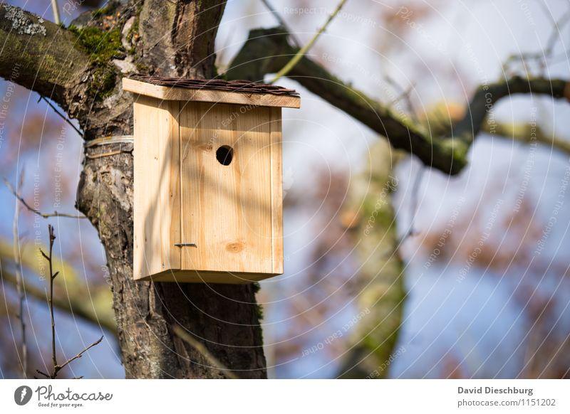 Nachmieter gesucht! Häusliches Leben Wohnung Haus Garten Umzug (Wohnungswechsel) Natur Frühling Sommer Schönes Wetter Baum Futterhäuschen Mieter