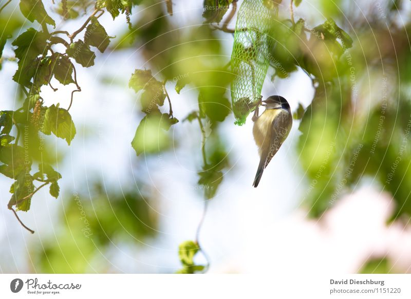 Raubtierfütterung Himmel Natur Pflanze grün weiß Sommer Baum Tier Winter Wald gelb Herbst Frühling Garten Vogel Park