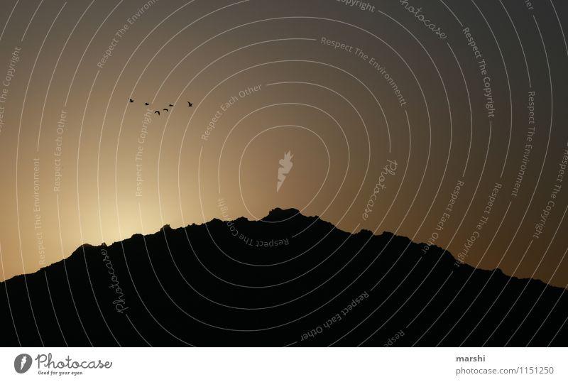 when the sun goes down Natur Sonne Sonnenaufgang Sonnenuntergang Klima Berge u. Gebirge Gefühle Vogel Sardinien dunkel Aussicht Farbfoto Außenaufnahme Dämmerung