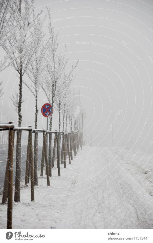 Winterlicher Radweg Schnee Eis Frost Bäume Nebel kalt Raureif Straße Strassenschild eisig kalt Parkverbot frieren gefroren Baum Außenaufnahme Kristallstrukturen