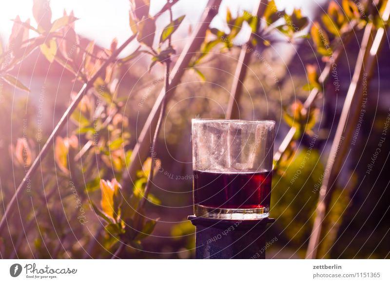 Wein (rot) Rotwein Glas Getränk Alkohol Abend Feierabend halbleer halbvoll Garten Schrebergarten Natur Pflanze Ranke Gartengeißblatt Geißblatt