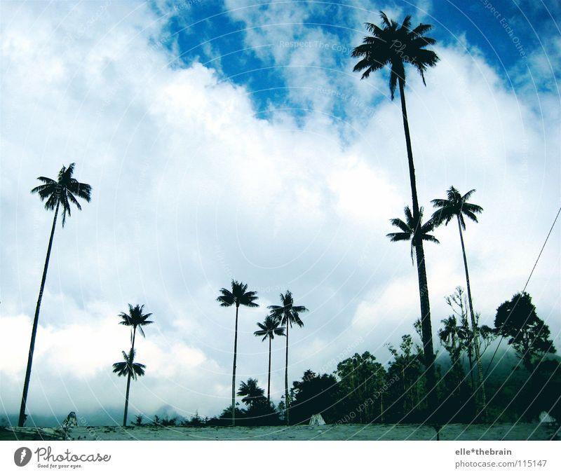 Palmen Ferien & Urlaub & Reisen Strand Kolumbien Sommer Blauer Himmel Freiheit Wetter