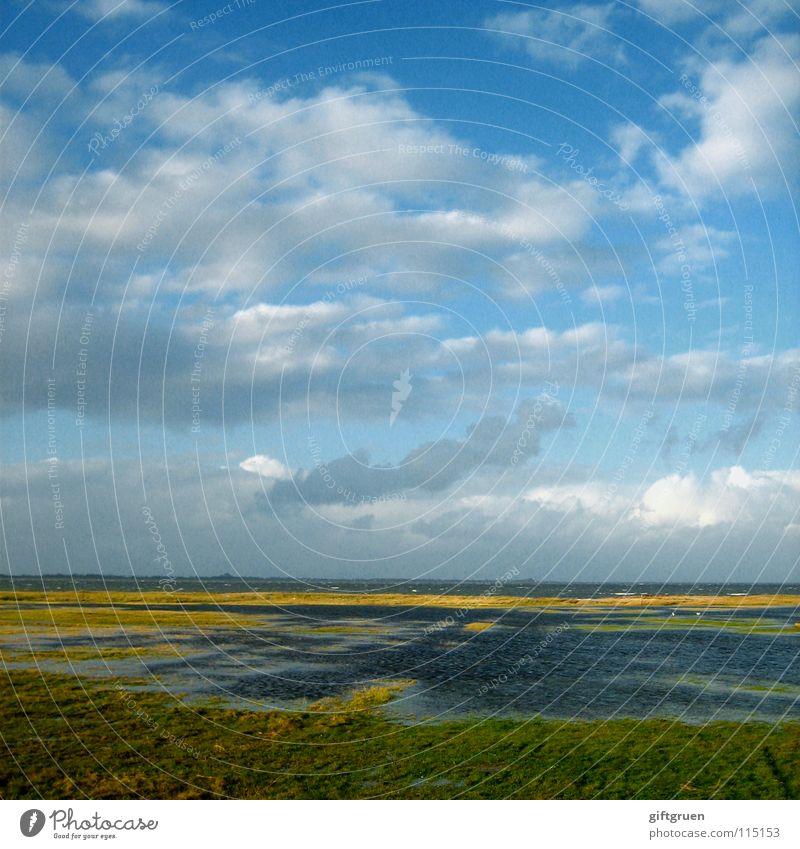 nordsee Herbst Herbstlandschaft Küste mehrfarbig Jahreszeiten Strand Meer Wolken Oktober November schlechtes Wetter Wiese Gras Ferien & Urlaub & Reisen Himmel