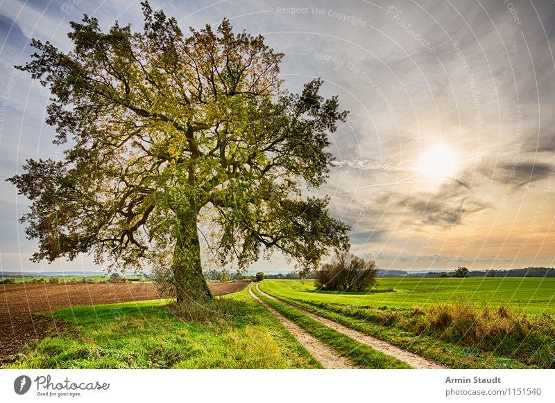 Alter Baum - Feldweg Ferne Sommer Umwelt Natur Landschaft Erde Himmel Horizont Frühling Herbst Schönes Wetter Wege & Pfade frei natürlich positiv gelb Stimmung