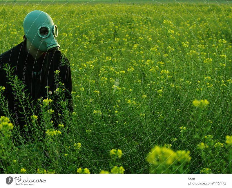 Weder Maja, noch Willi, aber auf der Honigsuche #2 Hand grün Pflanze Blume Freude schwarz gelb Landschaft grau Feld Angst Arme gefährlich planen bedrohlich
