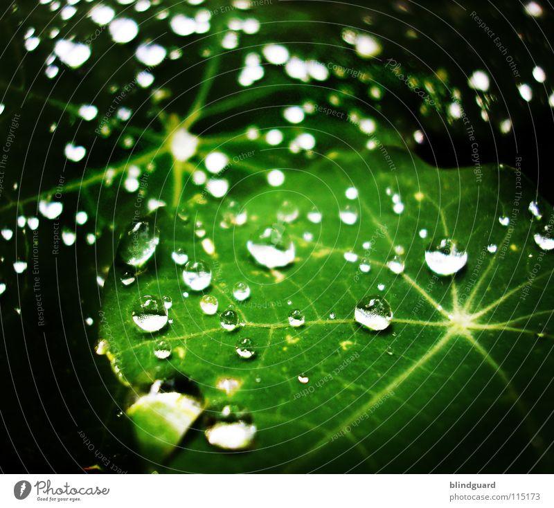 We're Stars Tränen Regen Wassertropfen Tropfen Blatt Reflexion & Spiegelung grün Stern (Symbol) Makroaufnahme nass Leben Garten frisch Licht glänzend Linie