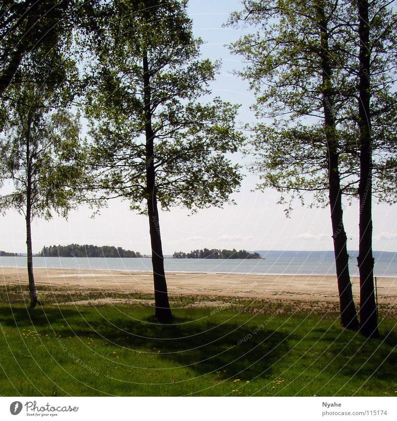 See-Idylle Baum ruhig Einsamkeit Strand Wasser Küste Natur Pflanze Schatten Schweden