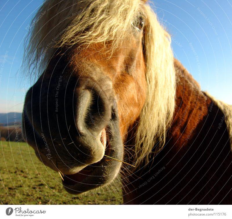 Jolly Jumper Himmel blau schön Farbe rot Freude Tier Leben blond Kraft Freizeit & Hobby Schönes Wetter Pferd Neugier Weide Lebensfreude