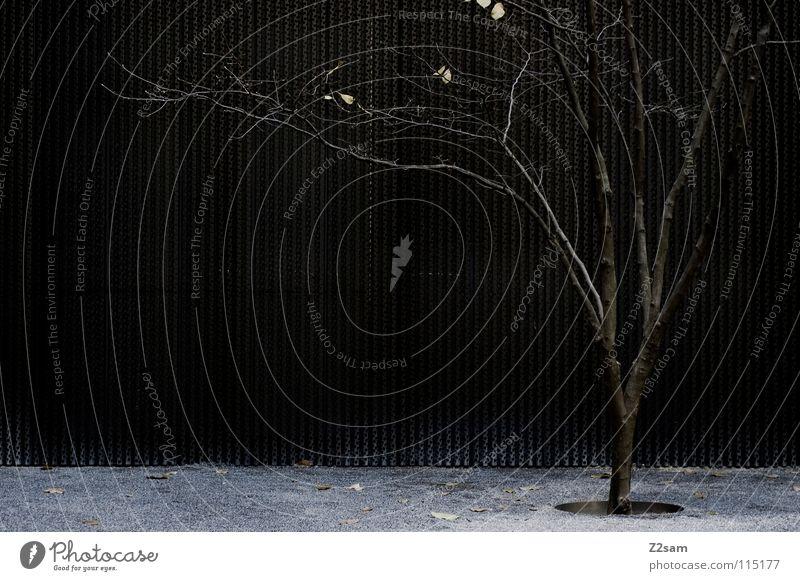alone in the dark Natur Baum Stadt Blatt Einsamkeit dunkel Wand Stil Garten Metall modern Wachstum stehen einfach Ast Kies