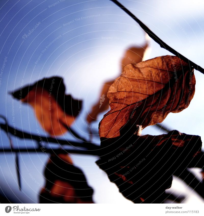 hängen geblieben Blatt Wolken Herbst Winter Jahreszeiten kalt Gefäße Gefühle Licht Ast Himmel Nahaufnahme Freiheit Schatten