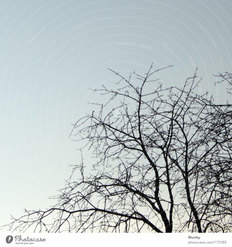 Willkommen, Winter! Himmel weiß Baum blau Winter schwarz kalt Herbst Tod braun Baumstamm Strommast Zweig Baumrinde verzweigt