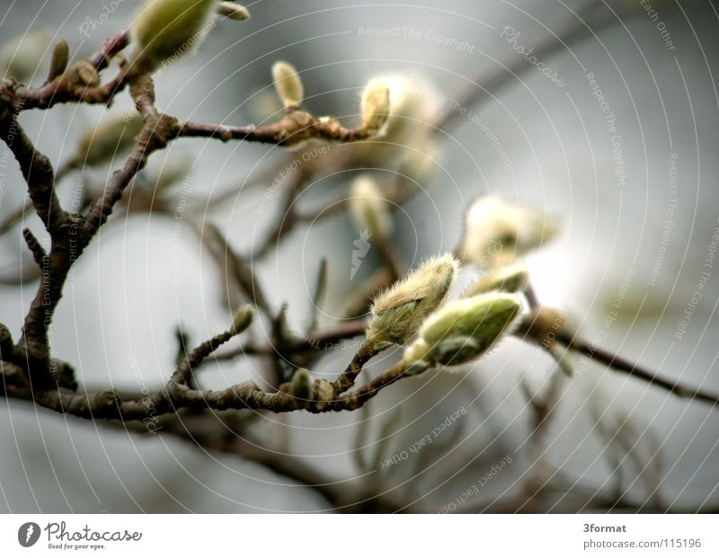 strauch Sträucher Baum Geäst Blüte Nieselregen feucht Trauer Märchen fantastisch träumen Verhext Einsamkeit trist November kalt Tau Morgen Nebel Herbst Winter