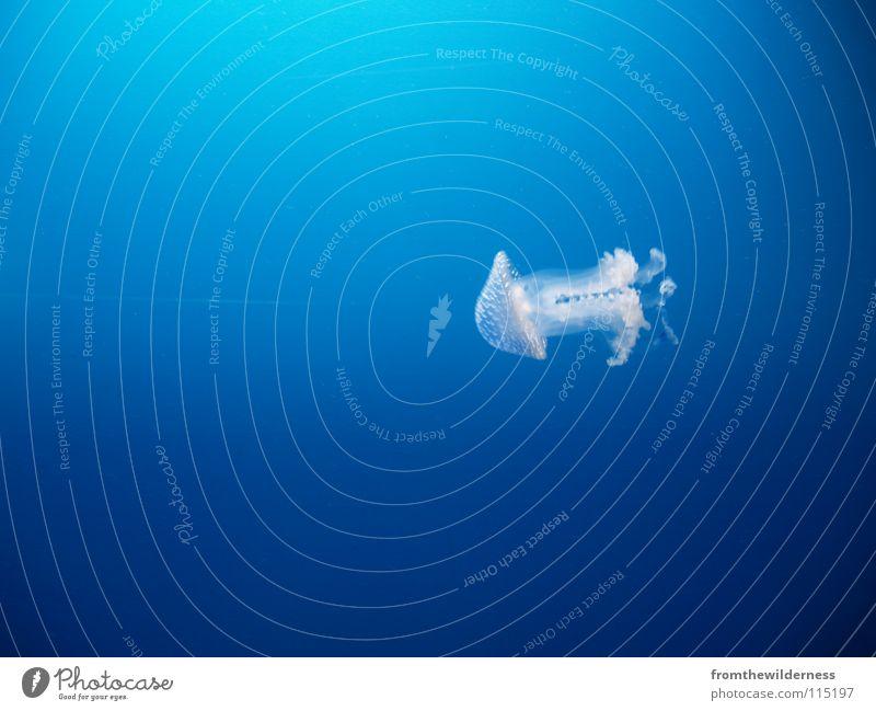 where Wasser Meer blau tauchen Qualle Karibisches Meer