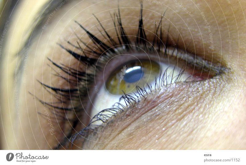 Mein Blick Wimpern Pupille Augenbraue Nahaufnahme Frau Detailaufnahme