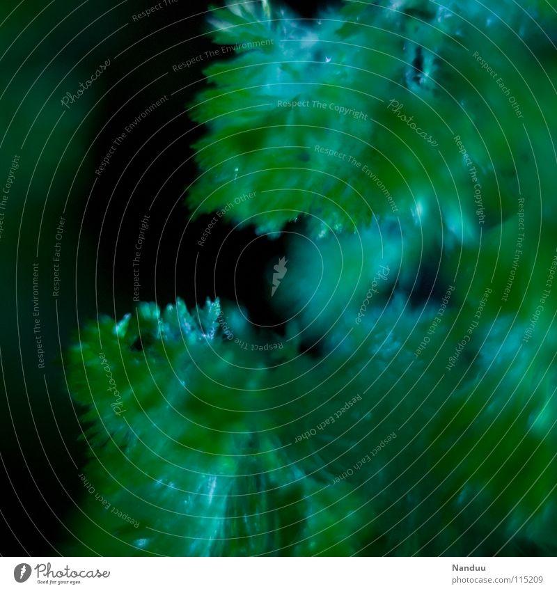 Märchenwald Hintergrundbild Baum grün filigran zerbrechlich Mikrofotografie Makroaufnahme stachelig Winter Experiment Wachstum weich Unschärfe Tiefenschärfe