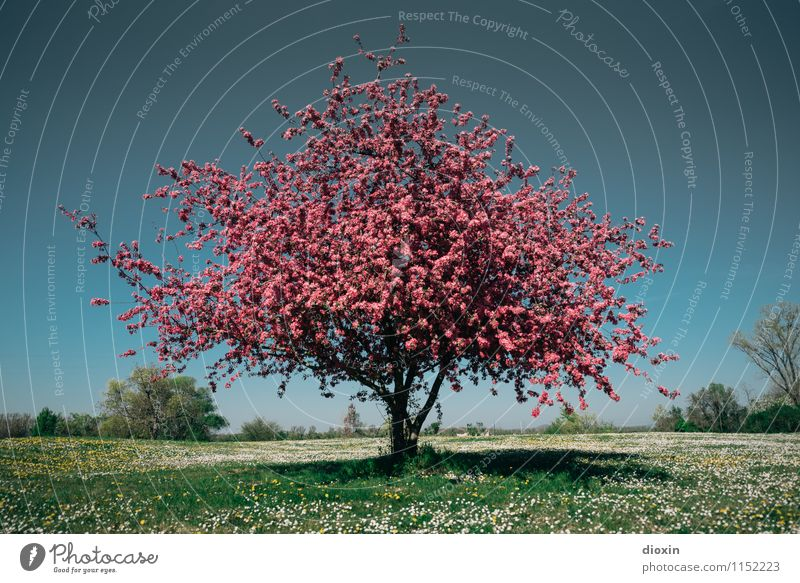 Spring Fever (4) Himmel Natur Pflanze schön Baum Blume Landschaft Umwelt Wärme Frühling Blüte Wiese Gras natürlich Garten Park