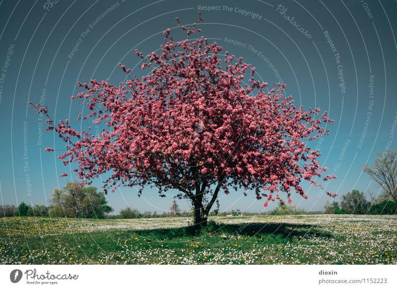 Spring Fever (4) Umwelt Natur Landschaft Pflanze Himmel Wolkenloser Himmel Frühling Baum Blume Gras Sträucher Blüte Garten Park Wiese Blühend Duft natürlich