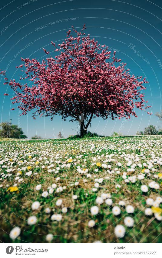 Spring Fever (2) Umwelt Natur Landschaft Pflanze Sonnenlicht Frühling Baum Blume Gras Blüte Garten Park Wiese Blühend Duft natürlich schön Wärme