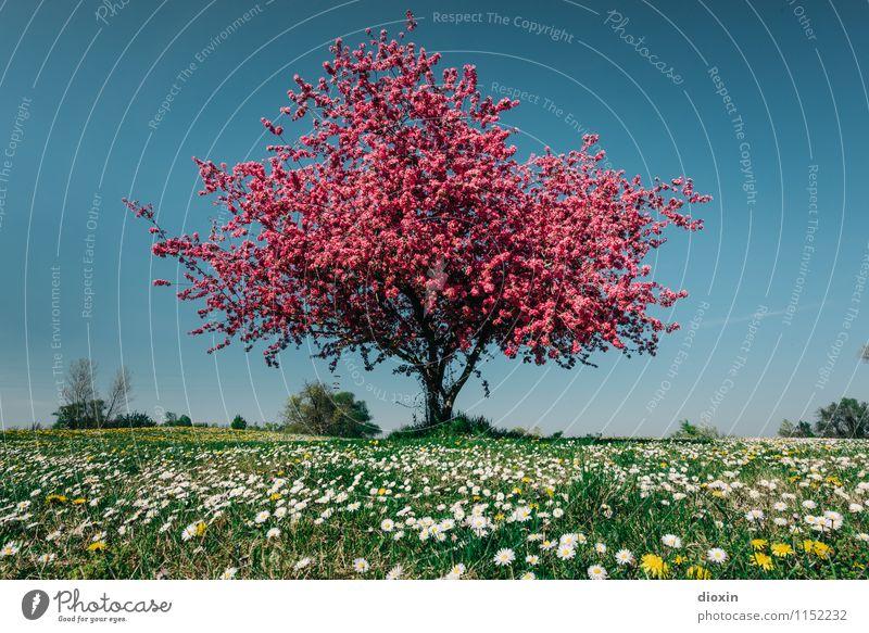 Spring Fever (1) Umwelt Natur Landschaft Pflanze Sonnenlicht Frühling Baum Blume Gras Blüte Garten Park Wiese Blühend Duft natürlich schön Wärme