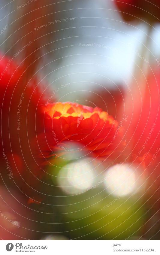 unscheinbar Natur Pflanze Schönes Wetter Blume Blüte Garten Park ästhetisch Duft elegant frisch glänzend natürlich positiv Wärme Gelassenheit geduldig ruhig