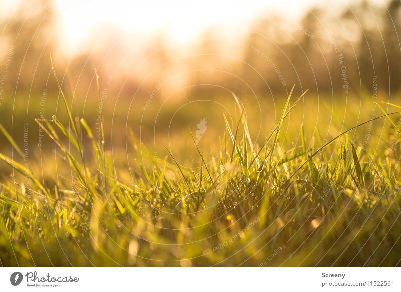 Entspannung Natur Landschaft Pflanze Frühling Sommer Gras Park Wiese Erholung Wachstum frisch klein grün Frühlingsgefühle Warmherzigkeit Gelassenheit ruhig
