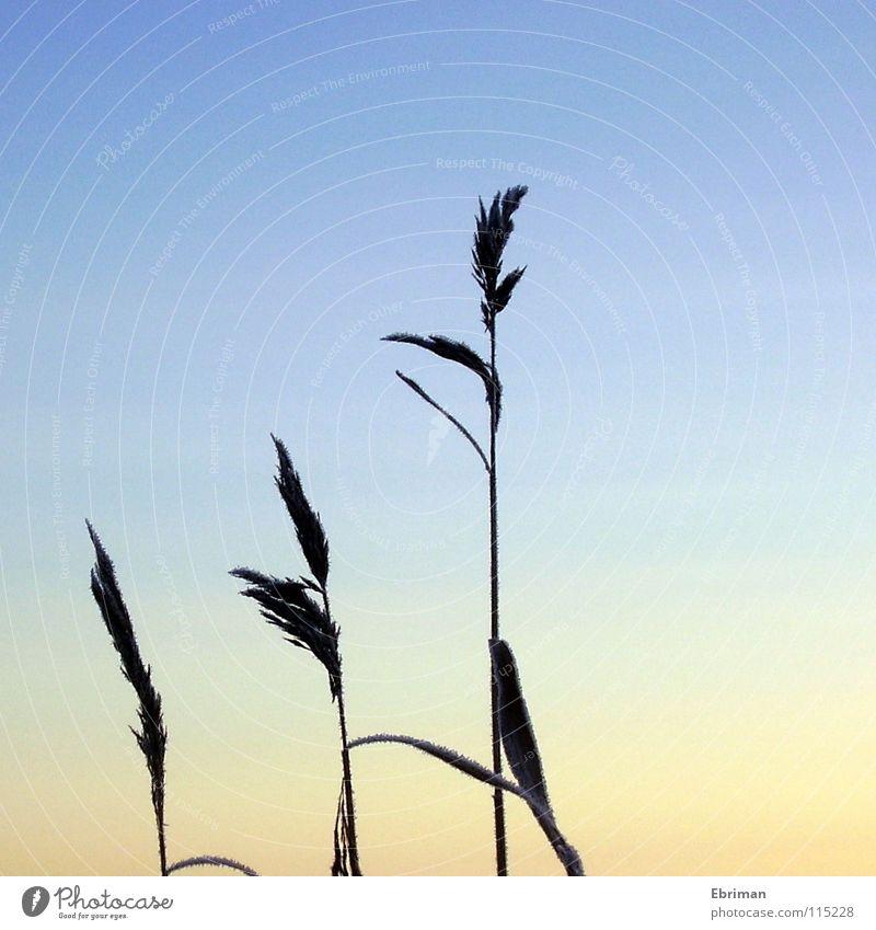 Die drei Gleichen Natur Himmel blau Winter schwarz kalt Gras See Eis hell orange Küste Frost Schweden